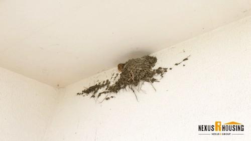 家の上の方に出来てしまった鳥の巣