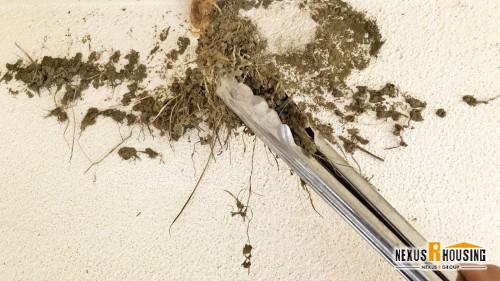 鳥の巣を撤去している様子